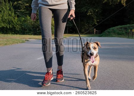 Woman In Running Suit Training With Her Dog. Young Fit Female And Staffordshire Terrier Dog Doing Mo