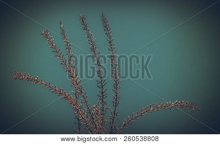A Unique Photo Of Bright Tender Offshoot  Of A Tree Growing