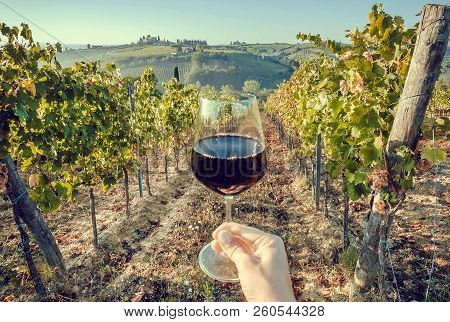 Glass Of Wine In Hand Of Tourist In A Natural Landscape Of Tuscany, With Green Valley Of Grapes. Win