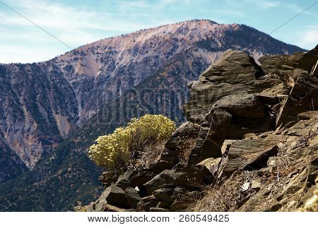 Rocky Terrain Including Wildflowers With Mt Baden Powell Beyond Taken In The Rural San Gabriel Mount
