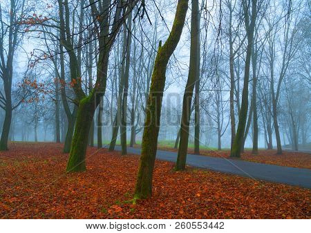 Autumn November foggy landscape. Deserted autumn park alley with bare autumn trees and dry fallen orange autumn leaves, mysterious autumn scene