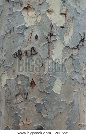 Pattern From Gum Tree