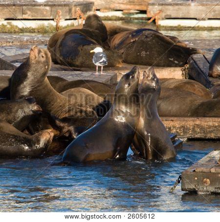 Friendly Sea Lions