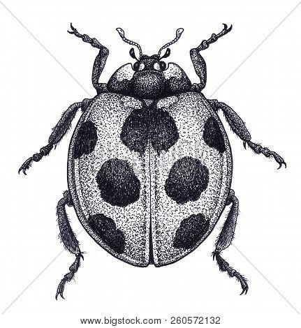 Ladybug Tattoo Art. Ladybird Illustration. Lady Beetle Tattoo. Dot Work Tattoo. Ladybug Symbol Of Lu
