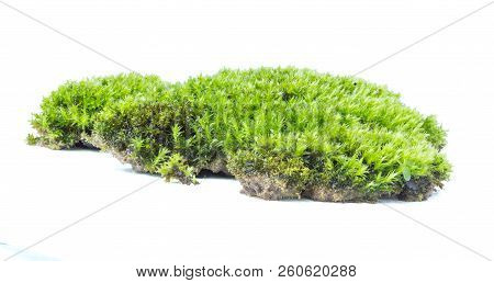 Green Moss Isolated On White Background Close Up