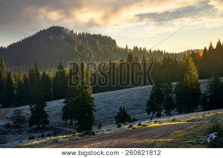 Majestic Sunrise In Mountainous Countryside. Spruce Tree Top In Morning Light. Grassy Meadow With Ho