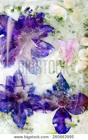 Background Of Blueclematis  Flower   Frozen In Ice