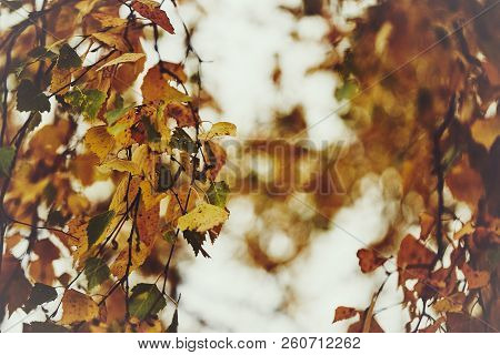 Photo Of Birch Leaves On A Tree. Golden Autumn. Sky Background