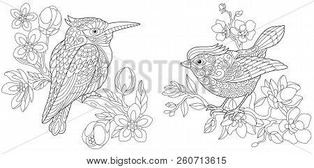 Coloring Pages. Coloring Book For Adults. Colouring Pictures With Kingfisher And Canary Bird. Antist