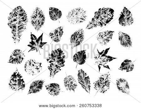 Ink Leaf Prints Isolated On White Background. Leaves From The Autumn Forest. Flower Texture. Vector