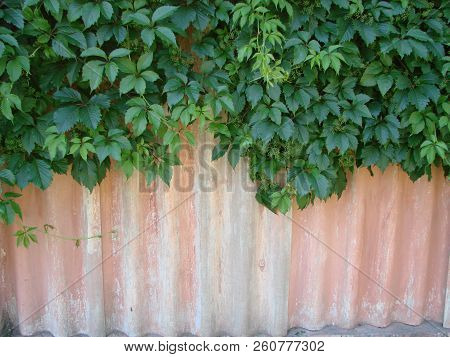 Texture Of A Stone Wall With Ivy. Old Castle Stone Wall Texture Background. Stone Wall As A Backgrou