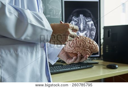 Human Brain Model On Doctor Hand. Doctor Using Pencil To Demonstrate Brain Anatomy. Background Of Mr