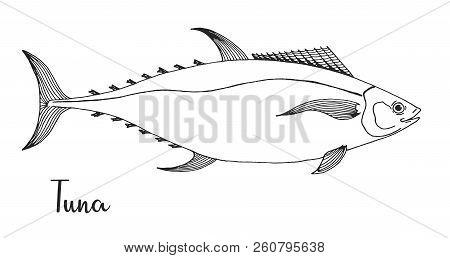 Hand Drawn Tuna. Vector Illustration In Sketch Style
