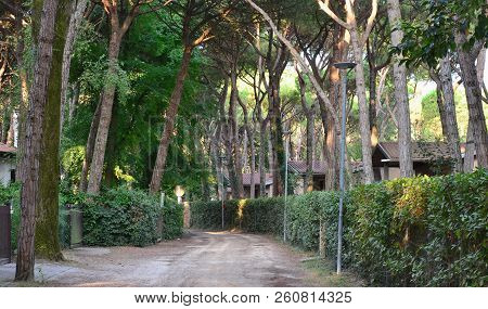 The Road Between The Bungalows In The Pine Grove, Eraclea Mare, Italy