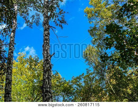 Forest Spring Landscape. Bright Green Forest. Forest Trees. Sun Through Vivid Green Forest. Peaceful