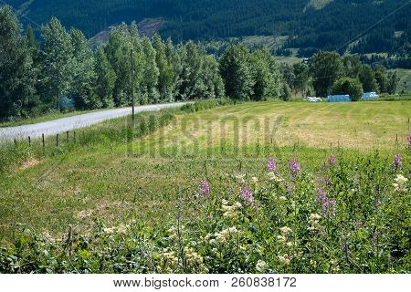 A Non-urban Road In The Countryside With Idyllic Trees, Farmland, Flowers And Meadow In The Roadside