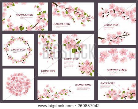 Sakura Vector Blossom Cherry Greeting Cards With Spring Pink Blooming Flowers Illustration Japanese