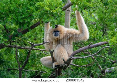 Monkey Sitting And Holding On A Wooden Branch