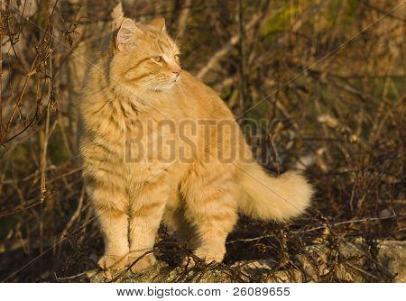 Orange cat enjoying the morning sun poster