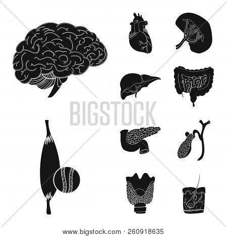 Isolated Object Of Body And Human Sign. Set Of Body And Medical Stock Vector Illustration.