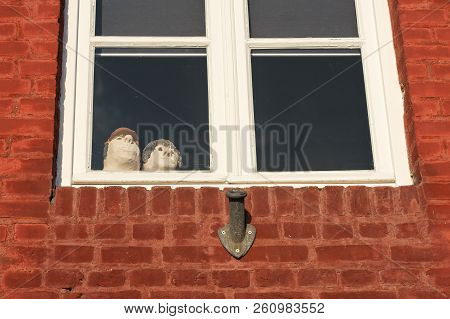 Faces From The Window Of The House. Two Faces Are Surprised And They Look Out Of The Window. Face Ma
