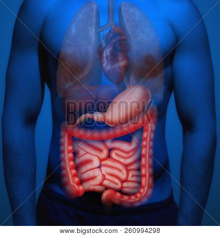 The structure of the human body. Human organs with an emphasis on the bowel. poster