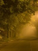 Country road through an enchanted forest at dawn.