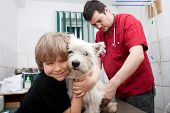 Little boy holding his Westie while the veterinarian is preparing to give a vaccine poster
