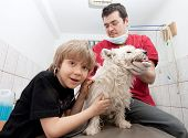 Little boy at vet listening to his dog's heartbeats in stethoscope poster