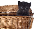 Black kitty looking at you poster