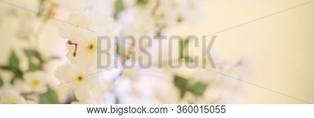 Blurry White Artificial Apple Blossom Flowers With Yellow Anthers And Green Leaves At Home Close Vie