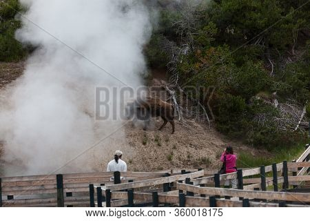 Yellowstone National Park, Usa - July 12 2014:  Tourists On A Boardwalk Looking At Roaming Bison Nea
