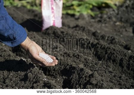 The Hand Of A Woman Farmer Holds A Handful Of White Granules Of Fertilizer Over The Earth Bed.