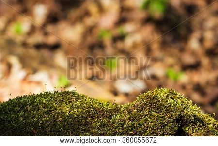 Empty Tree Moss Trunk For Display Montags. Green Spring Soft Background