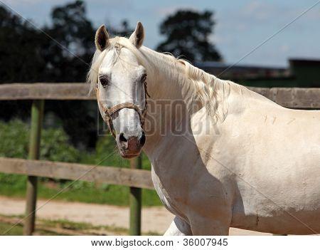 White horse in the sun