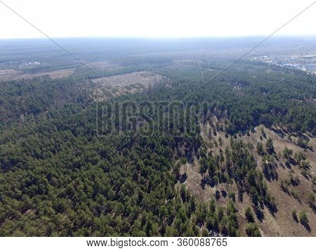 Deforestation. Ecology of Ukraine.The fate of the felled pine forest. Ukraine is increasing timber exports to the European Union after the 2014 coup. (drone image).Near Kiev,Ukraine