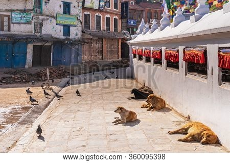 March 25, 2020. Kathmandu, Nepal. The ​​stupa Bouda Closed On Quarantin. A Lonely Dogs  Bask In The