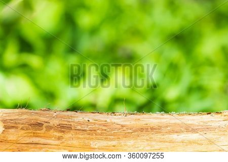 Template From Tree Trunk Surface And Natural Blured Background, For Placing Your Product