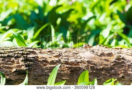 Empty Woodenold Tree Trunk With Blur Green Leaves Bokeh Background For Product Display Montage
