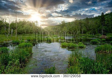 Marshy Wilderness Pond Under The Setting Sun