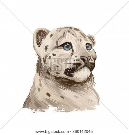 Snow Leopard Baby Tabby Portrait In Close Up. Watercolor Digital Art Illustration Of Panthera Uncia.