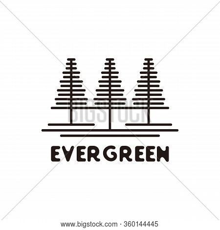 Pine Evergreen Fir Hemlock Spruce Conifer Cedar Coniferous Cypress Larch Pinus Tree Forest Vintage R