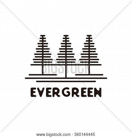 Pine Evergreen Fir Hemlock Spruce Conifer Cedar Coniferous Cypress Larch Pinus Tree Forest Vintage R