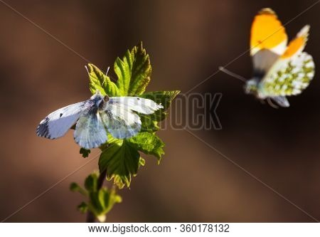 Two Butterflies On A Flower. Nature Love