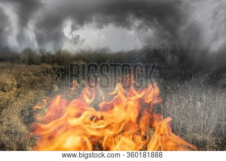 Burned Field With Anthills