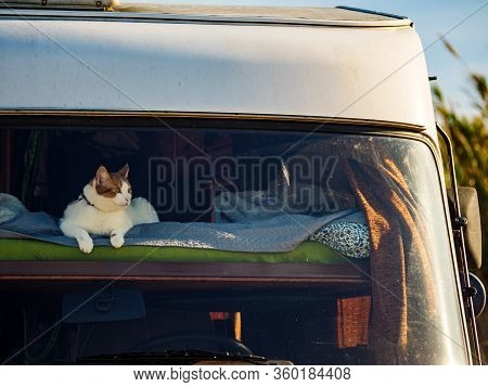 Cat Laying On Bed In Rv Integra Camper Car And Looking Around Trought Front Window Pane. Motorhome T
