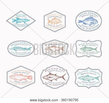Fish Vintage Frame Badges Or Logo Templates Set. Tuna, Herring, Mackerel, Sturgeon, Etc. Fish Illust