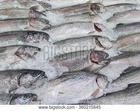 Fresh Chilled Fish Lying On The Ice. Fresh Fish In The Store Limited Depth Of Field
