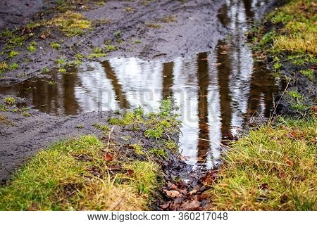 Puddle In Forest, Reflection Of Trees In Puddle