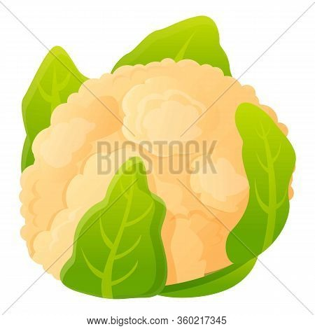 White Green Cabbage Icon. Cartoon Of White Green Cabbage Vector Icon For Web Design Isolated On Whit